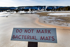 """Do not mark bacterial mats"" sign in the Upper Geyser Basin (YellowstoneNPS) Tags: signs thermophiles uppergeyserbasin"