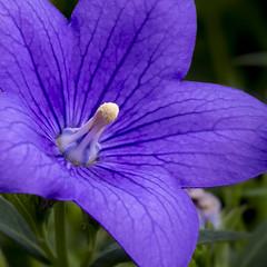 7P7A4752-Edit-Edit-2 (Mark Ritter) Tags: floral flora flowers closeup macro nature garden