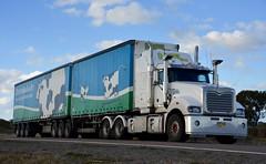 Maxwells (quarterdeck888) Tags: trucks transport semi class8 overtheroad lorry heavyhaulage cartage haulage bigrig jerilderietrucks jerilderietruckphotos nikon d7100 frosty flickr quarterdeck quarterdeckphotos roadtransport highwaytrucks australiantransport australiantrucks aussietrucks heavyvehicle express expressfreight logistics freightmanagement outbacktrucks truckies maxwells maxwellsfreightlins tautliner