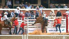 DSC02116 (♥ MissChief Photography ♥) Tags: calgarystampede2017 calgary canada horses bull cowboy bullfighters