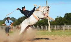 Xiru Martins (Eduardo Amorim) Tags: gaúcho gaúchos gaucho gauchos cavalos caballos horses chevaux cavalli pferde caballo horse cheval cavallo pferd crioulo criollo crioulos criollos cavalocrioulo cavaloscrioulos caballocriollo caballoscriollos pampa campanha fronteira bagé riograndedosul brésil brasil sudamérica südamerika suramérica américadosul southamerica amériquedusud americameridionale américadelsur americadelsud cavalo 馬 حصان 马 лошадь ঘোড়া 말 סוס ม้า häst hest hevonen άλογο brazil eduardoamorim gineteada jineteada