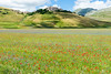 La Fioritura (The Flowering) (MikePScott) Tags: buttercups camera castelluccio clover flowers hills italia italy lens mountains nikon2470mmf28 nikond800 norcia plain plants poppies topography trees umbria