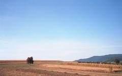 tree + hill = landscape (Jos Mecklenfeld) Tags: minoltahimatic7sii minolta himatic 7sii kodakektar100 kodakektar ektar film ishootfilm varatec românia romania roemenië moldova moldavië moldavia epsonv500 epson landscape landschaft landschap tree baum boom neamt