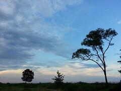Alexandria. (presteza777) Tags: alexandria petergof stpeterburg russia landscape summer park thegulfoffinland trees