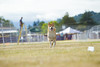 _MG_9958 (Corey Polis) Tags: akc coursing dogsports fastcat july302017 mushu nwrrc sequim