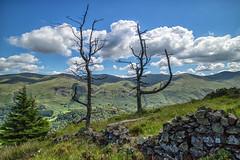 Dead.. (Tall Guy) Tags: tallguy uk ldnp lakedistrict cumbria ravencrag tree unescoworldheritagesite unesco world heritage site