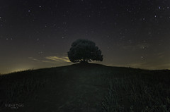 Leccione-Pieve-a-salti_F (NENA_OTTO) Tags: albero leccio notte notturna notturne pieveasalti