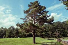 brundage (Visual Thinking (by Terry McKenna)) Tags: brundage park randolph nj