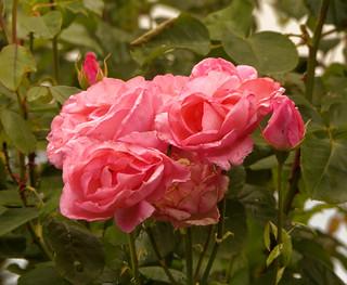 Le bouquet mouillé - The wet bouquet