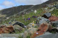 vallon de Barneuza (bulbocode909) Tags: valais suisse mottec zinal valdanniviers vallondebarneuza rochers montagnes nature fleurs vert bleu nuages coldesarpettes