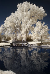 Reflected (arbyreed) Tags: arbyreed infrared 665nanometerinfrared colorinfrared falsecolorinfrared inverted tree trees pond water reflection provo utahcountyutah bicentenialpark infraredconvertedcanon20d