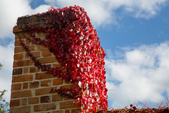 Sunnyside (Keith Midson) Tags: chimney autumn leaves red growth bricks sky hobart royalhobartbotanicalgardens rtbg