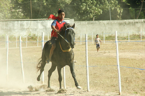 Horse race in Waingapu
