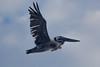 IMG_4765 (armadil) Tags: mavericks beach beaches californiabeaches bird birds pelican pelicans flying