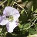 Sandia Pollinators 6