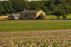 Summer Fields (ianbonnell) Tags: fields rural billinge sthelens merseyside lancashire england