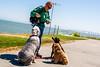 Fun at the Park 3 (NickRoseSN) Tags: parks fun niceweather fundayatthepark sanmateo sanmateocounty california ca photography dogwalker dogs dog sealpointpark sealpoint