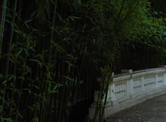 (vik.gaponenko) Tags: tree building vik seacalf outdoor summer day city sochi calm walk street warm nature view sony bamboo bridge