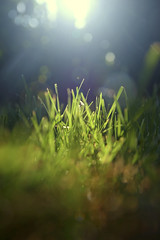 Grass (-Simulacrum-) Tags: grass sunlight fly nikon nikond5300 nature sigma 170500mmf28 creative nikonphotography green lawn bokeh dof