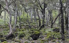IMG_0434 (álvaro argüelles) Tags: naturaleza beauty natural nature forest moss