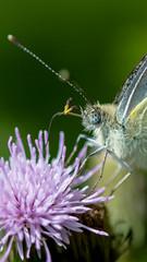 DSC_2960 (Franck.H Photography) Tags: macro insectes araignée coccinelle