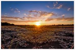Californian sunset (istergio) Tags: california sunset rural sun treeline usa sky