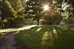 Light burst (Explore 23/7/2017) (therobspedding) Tags: light sunburst bathengland england tree goldenhour trees morning sun nature nikon nikond3300 1855mm park urban bath