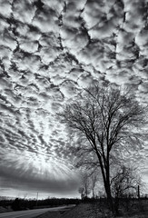 'It's cloud's illusions I recall ... ' (Canadapt) Tags: clouds highway tree farmland fence sun rays canadapt bw