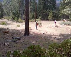 008 A Clearing Control (saschmitz_earthlink_net) Tags: 2017 california orienteering laoc losangelesorienteeringclub bartonflats sanbernardinocounty sanbernardinonationalforest forest clearing control dog participant kimwright