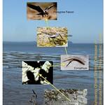 15 Mudflat to shorebirds thumbnail