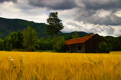 (Morten T.) Tags: norge norway canon cornfield farm oldbuilding