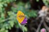 _D7K9483 (lions_italy) Tags: emilius escursioni gsv pila