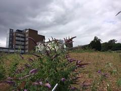 The Old Cinema (My photos live here) Tags: royal cinema waste ground plant flower mount ephraim tunbridge wells kent england town urban
