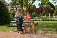 Stresa - Italy / The Briard dog (Pantchoa) Tags: stresa italie lacmajeur parc jardin nature briard bergerdebrie chien banc race sigma1750f28 d7200