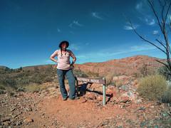 Larapinta Trail Waspcam