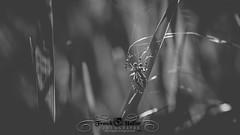 DSC_2880 (Franck.H Photography) Tags: macro insectes araignée coccinelle