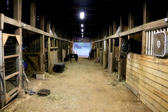 2016-10-16 (42) after the horse show (JLeeFleenor) Tags: photos photography md maryland croom family barn farm inside horse equine stalls horses thoroughbreds equestrian cheval cavalo cavallo cavall caballo pferd paard perd hevonen hest hestur cal kon konj beygir capall ceffyl cuddy yarraman faras alogo soos kuda uma pfeerd koin حصان кон 马 häst άλογο סוס घोड़ा 馬 koń лошадь