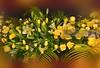 Flowers (DSC_8117) (fatima_suljagic) Tags: fineartprints fatimasuljagicmelbourne photographer artstudiomaja artstudiomajacomau melbourne melbournephotographer melbournecity australia australianphotographers