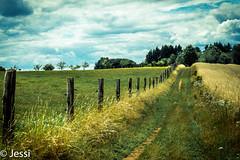 arcadian path (Felicis_Flower) Tags: pfad path weg way feld field saarland gras gren grün gelb yellow wheat weizen zaun fence wood holz