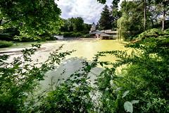 _DSC2278 Alden B. Dow Home And Studio (Charles Bonham) Tags: dowgardens midlandmi aldenbdowhomestudio pond architecture plants shrubbery allege organicarchitecture sonya7rll outdoor summer charlesbonhamphotography