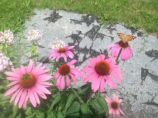 ** Le Papillon et sa Belle du moment... **