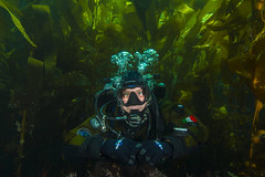 diver1Jul7-17 (divindk) Tags: anacapa anacapaisland californiaunderwater channelislands channelislandsnationalpark francescocameli gue globalunderwaterexplorers sanmiguelisland santabarbara santacruzisland santarosaisland scubadiving underwater ventura diver diverdoug drysuit kelp kelpforest marine ocean reef scubadiver sea underwaterphotography