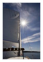 Blau weiß (*MH*) Tags: blau blue weis weiss white segeln sailing segel seil sonne sun gegenlicht sonnenstern himmel sky sommer summer segelboot sailboat wasser see sea backlight