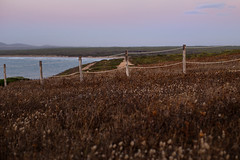 I campi (trnk28 [mk-II]) Tags: sucrastubiancu canon6d canoneos6d eos6d sunset sea beach tramonto spiaggia mare scogliere faraglioni sardegna sardinia italia italy sanvero sanveromilis oristano 50mm 50mmf14 fields campi flowers