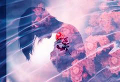 Hearts Align (Hayden_Williams) Tags: rose flowers flower flowergarden floral spring bloom petals heart love romance sadness heartbreak dream dreamy dreaming dreams daydream girl grain garden grainy blue purple lomography lomochromepurplexr100400 water pool swimming tides underwater doubleexposure multipleexposure tripleexposure film fd50mmf18 analog analogue canonae1
