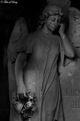Nijmegen, Begraafsplats Daalseweg (Sven Kapunkt) Tags: nijmegen begraafsplats cemetery cemeteries cimetière friedhof friedhöfe gräber grab graveyard grabmal holland niederlande netherlands angel engel statue
