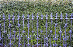 Norfolk 3-1-17 0016 (Nothing happening here. Move along.) (cbonney) Tags: norfolk virginia freemason street historic district cast iron fence hedge