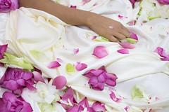 IMG_9157.jpg (Dhammika Heenpella / Images of Sri Lanka) Tags: dhammikaheenpella srilanka imagesofsrilanka flowers lotuspetals ධම්මිකහීන්පැල්ල ශ්රීලංකාව comfort hand smooth soft ඉමේජස්ඔෆ්ශ්රීලංකා මල් මල