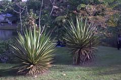 Jataí, Goiás, Brasil (Proflázaro) Tags: brasil goiás jataí parqueecológicodiacuy parque canteiro planta natureza ecologia jardim cidade cerrado