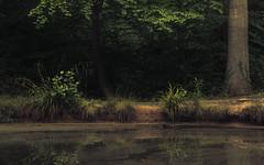 The Pond (Netsrak) Tags: 7weiher abend atmosphäre baum bäume europa europe forst landschaft natur rheinland rhineland see seen sommer stimmung teich wald wasser atmosphere evening forest gelb green grün lake landscape mood nature pond summer tree trees water woods
